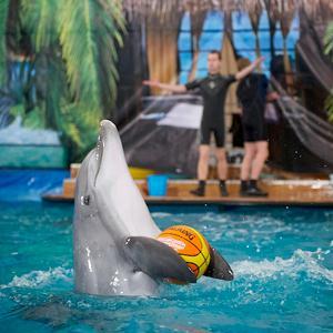 Дельфинарии, океанариумы Слюдянки