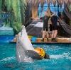 Дельфинарии, океанариумы в Слюдянке